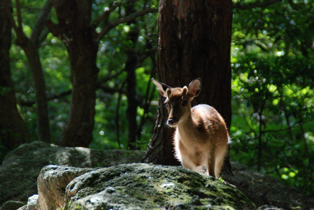 Isola di Yakushima (Kagoshima)